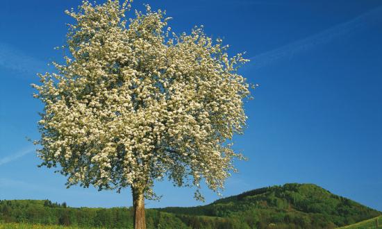 Baumbluete © Oesterreich-Werbung_Wolfgang-Weinhaeupl