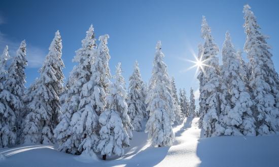 Tief verschneite Bäume am Rossbrand © Coen Weesjes