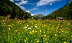 Blumenwiese-im-Soelktal © Oesterreich-Werbung_Tom-Lamm